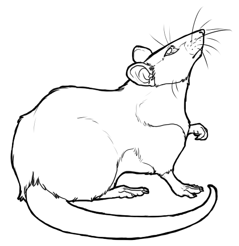 Drawn rat rat line Lineart Rat by Lineart by