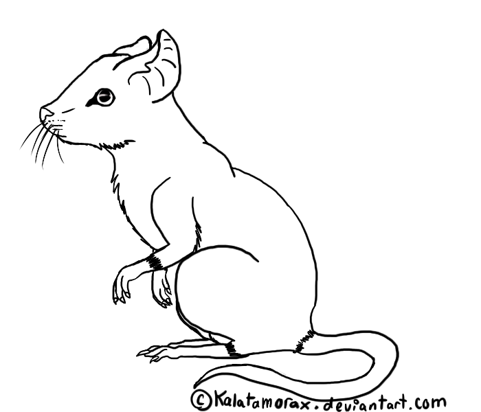 Drawn rat rat line SkylandAcresRescue Crappy 5 Lineart 11