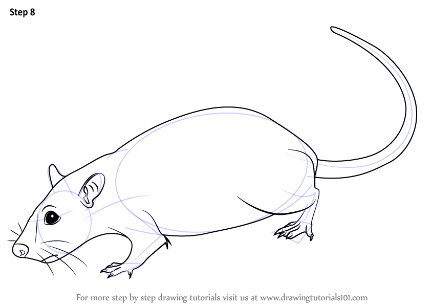 Drawn rat rat line Step to necessary : Learn
