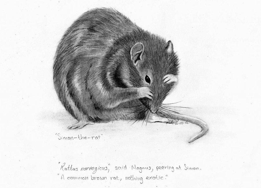 Drawn rat realistic The kteggart kteggart Simon by