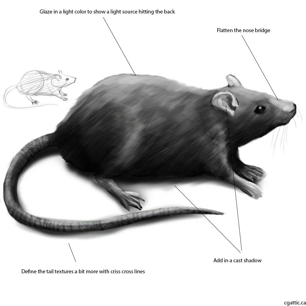 Drawn rat shadow In Draw How Fur Cute