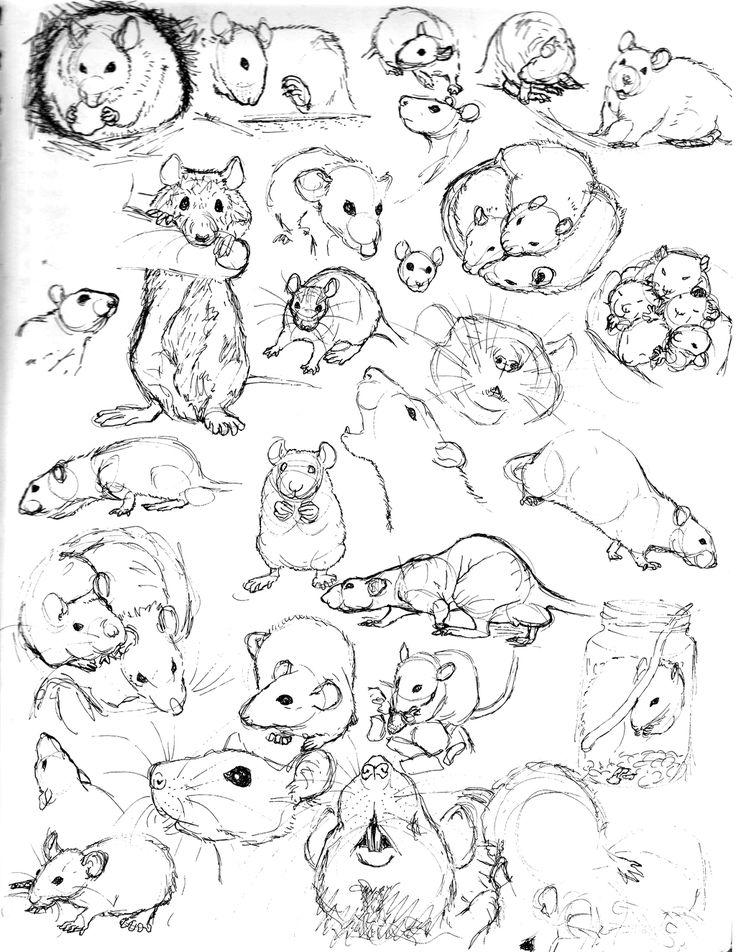 Drawn rat sketch By nEVEr sketches Sketch deviantart