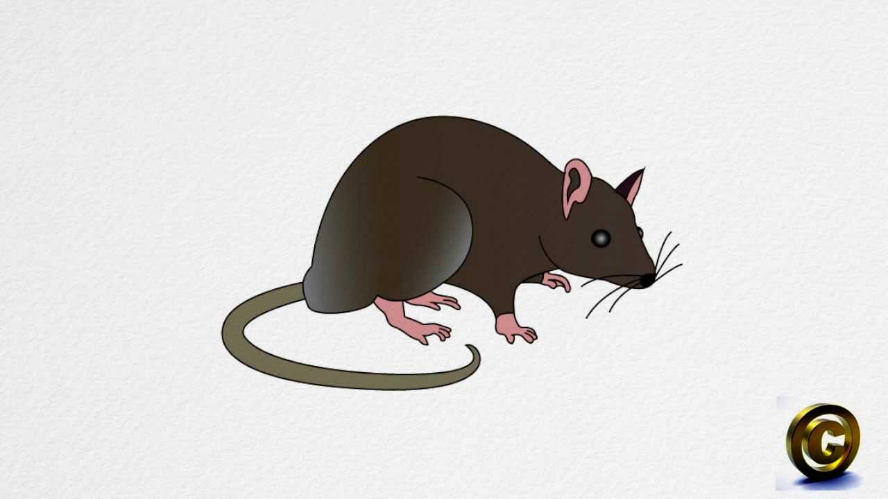 Drawn rat two Step RAT RAT by to