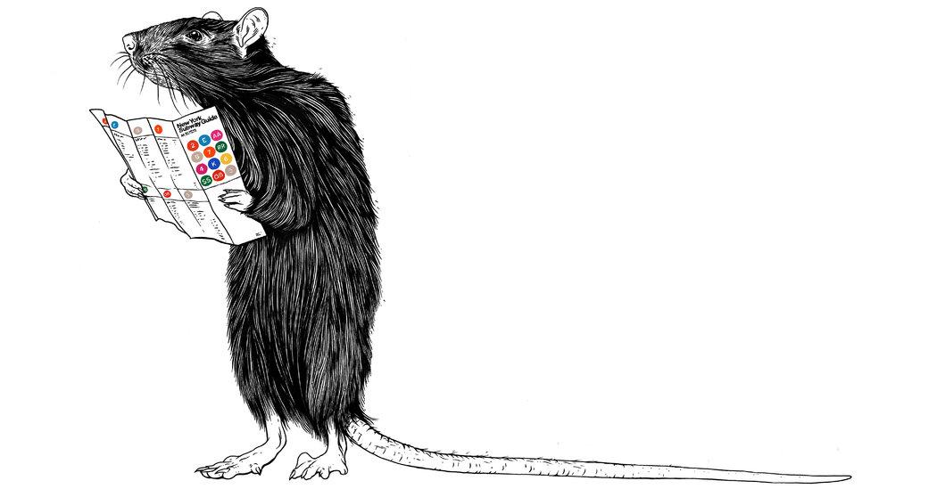 Drawn rat two New of York Rat The