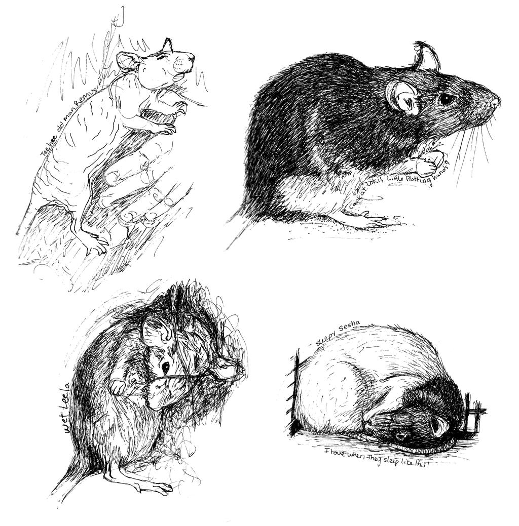 Drawn rat vomit On Rat Sketches Detail Rat