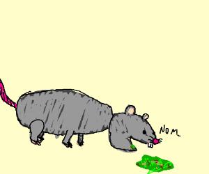 Drawn rat vomit Eating Much rat vomit Sauce