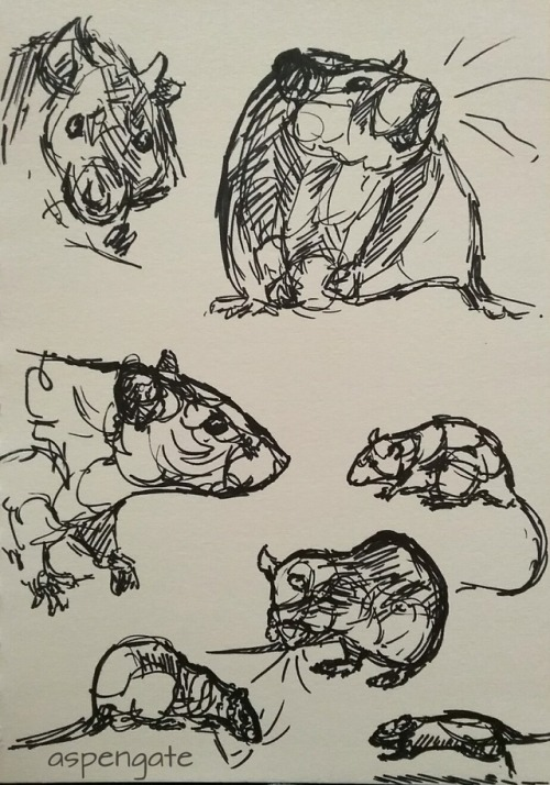Drawn rat vomit Rat cuddles Tumblr rat pen