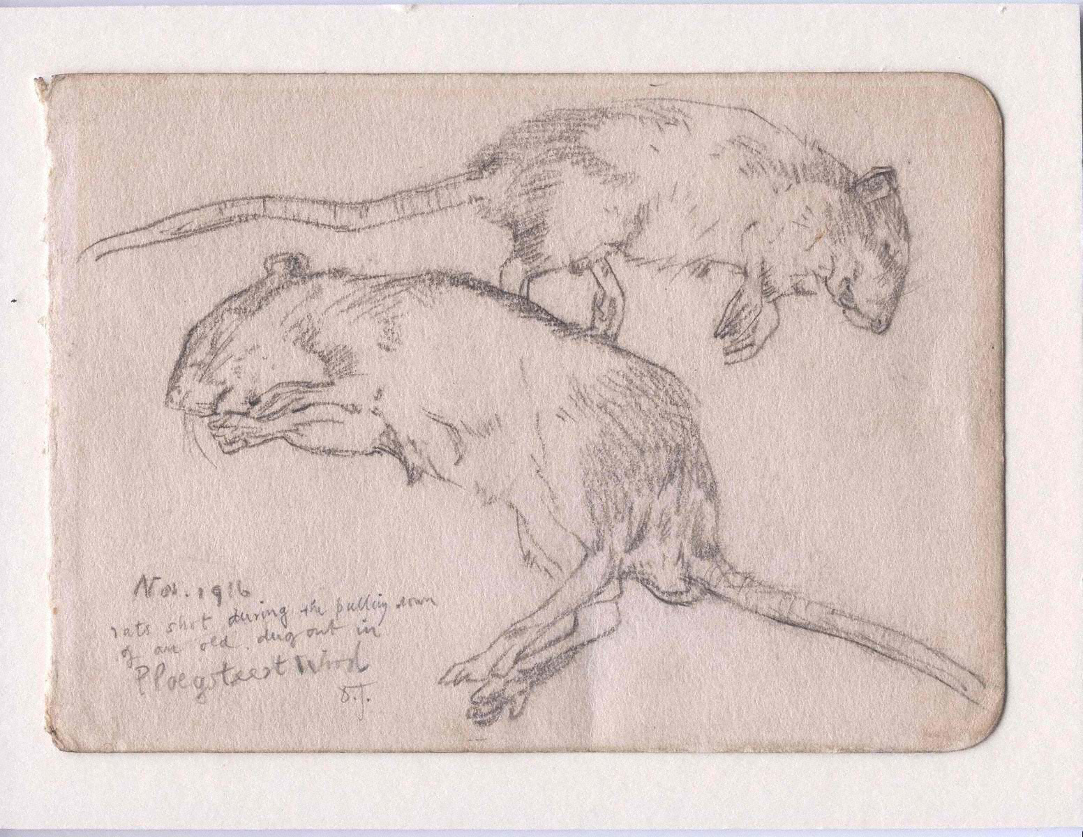 Drawn rat ww1 Contents Data package package 6159
