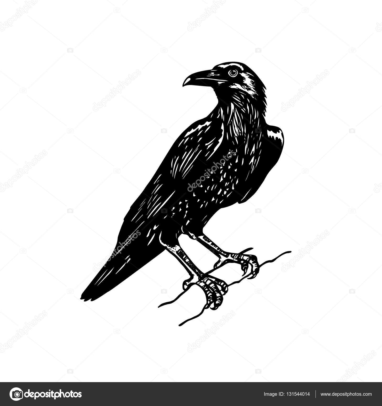 Drawn raven #131544014 raven Hand drawn Stock