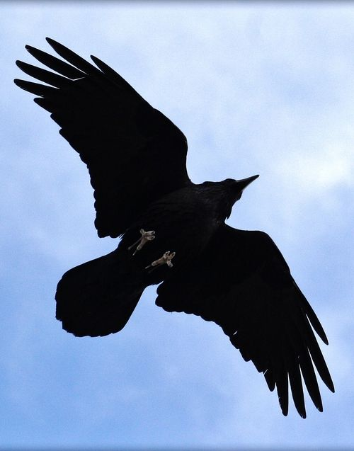 Drawn raven above On images photos best Crows