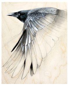 Drawn raven anatomy Find Raven this on Raven