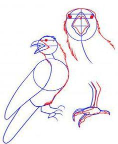 Drawn raven anatomy How Crow animals  to