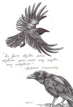 Drawn raven anatomy Once 482 Pinterest crows and