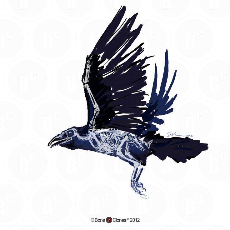 Drawn raven anatomy Raven The  on Pinterest