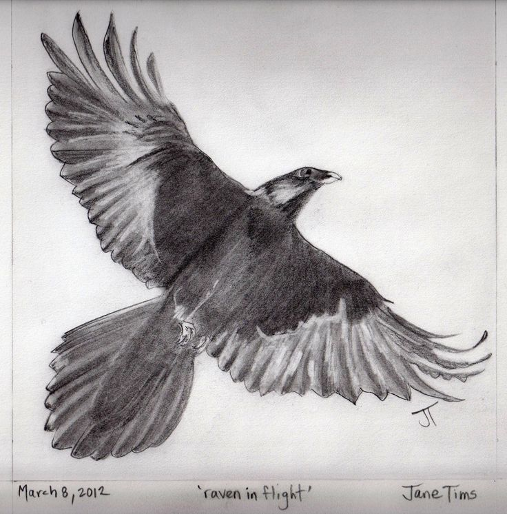Drawn raven angry Wings Becuo Pinterest ravens &