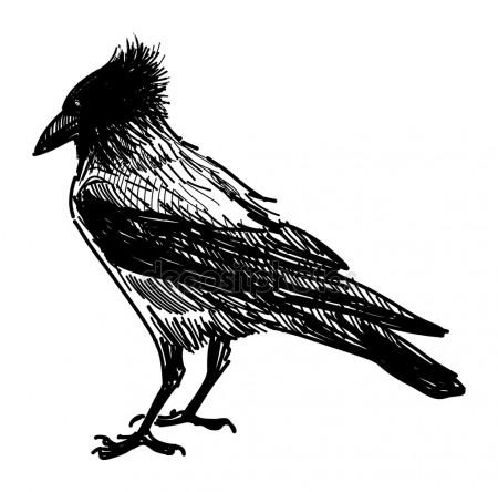Drawn raven angry  crow raven Illustrations Angry