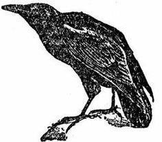 Drawn raven apollo Birds prophecy god dan mumford