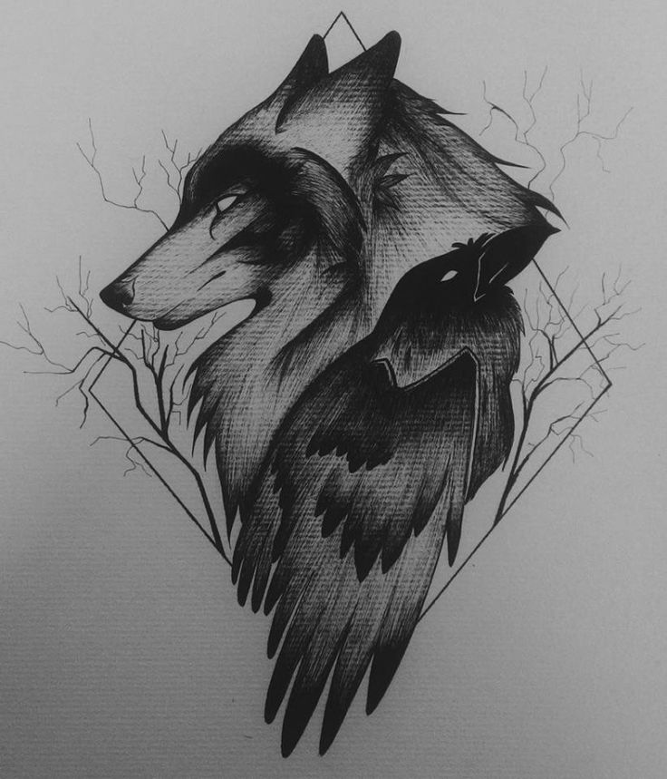 Drawn raven artistic And and Digital  Wolf