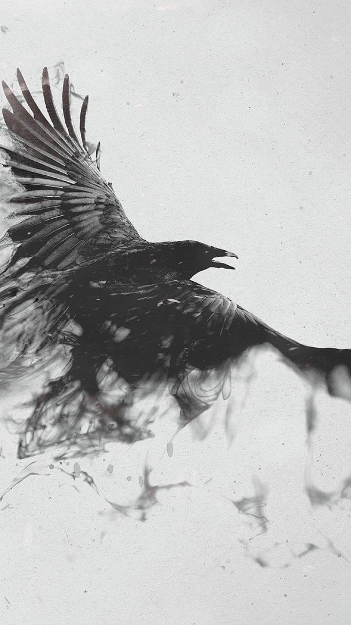 Drawn raven black and white Black Wallpaper  Wallpaper 720x1280