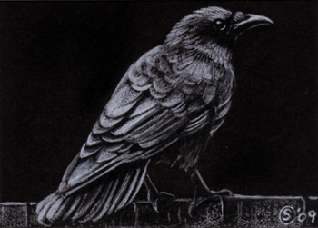 Drawn raven black raven Limited Edition colored  Limited