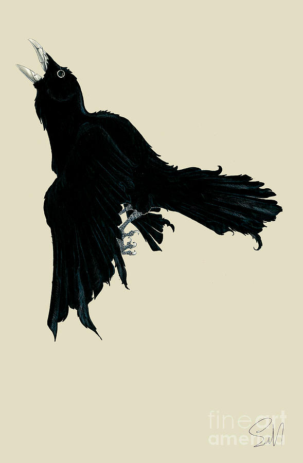 Drawn raven black raven Raven Nils by Black Leemans