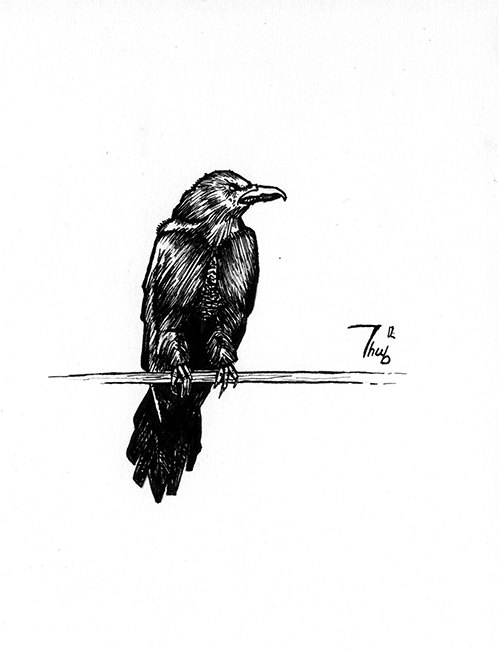 Drawn raven black raven Raven drawing on traditional