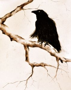 Drawn raven branch Raven  Drawing Crows Paintings