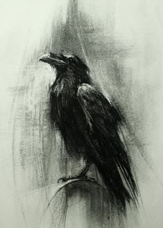Drawn raven charcoal Crows I love Crows is