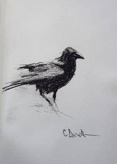 Drawn raven charcoal Colin Work © Raven Raven