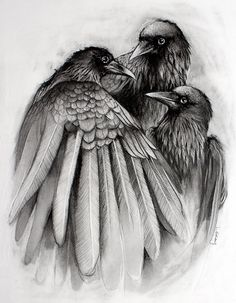 Drawn raven charcoal Charcoal from original The this