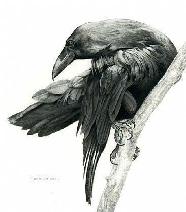 Drawn raven common raven On best raven The 175
