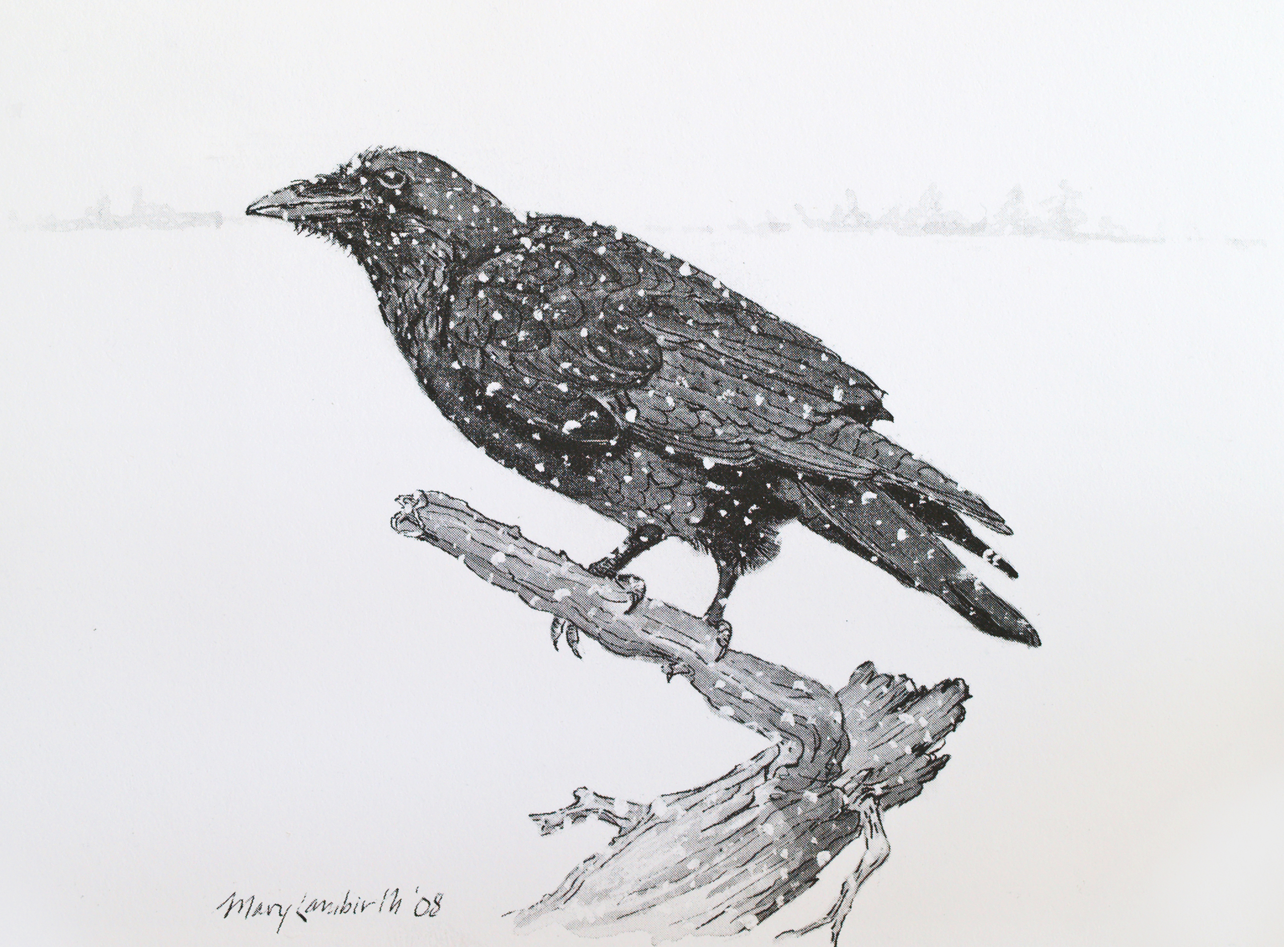 Drawn raven common raven A Lambirth Waters A (Mary