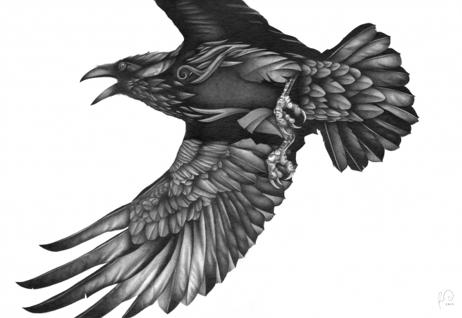 Drawn raven corvus corax Corax &  Illustrators Corvus