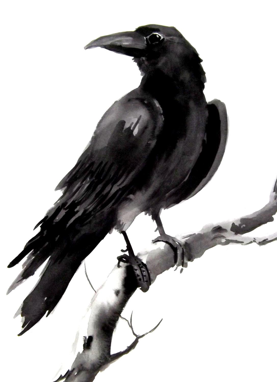 Drawn raven creepy 12 Crow 9 9 Crows