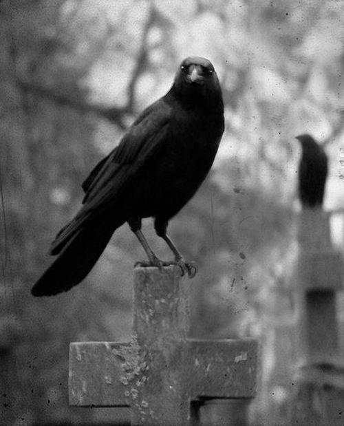 Drawn raven creepy Raven 20 and Blackbirds 4