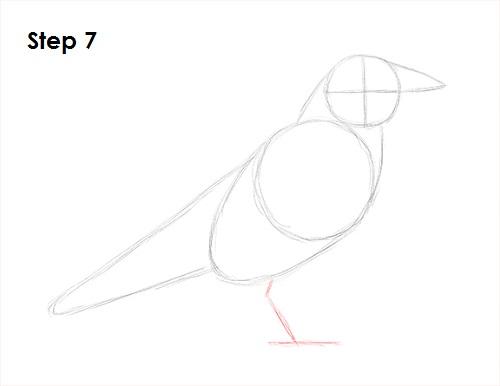 Drawn raven crow beak Bird 7 to Crow) Raven