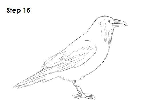 Drawn raven crow beak Bird 15 to Crow) Raven