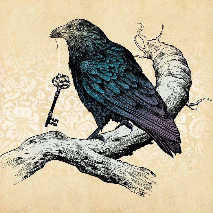 Drawn raven crow beak Pin and on images this