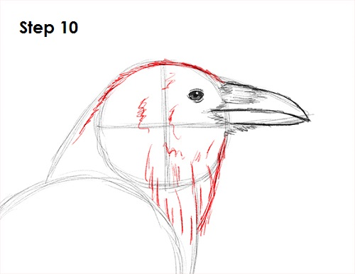 Drawn raven crow beak Bird 10 to Crow) Raven