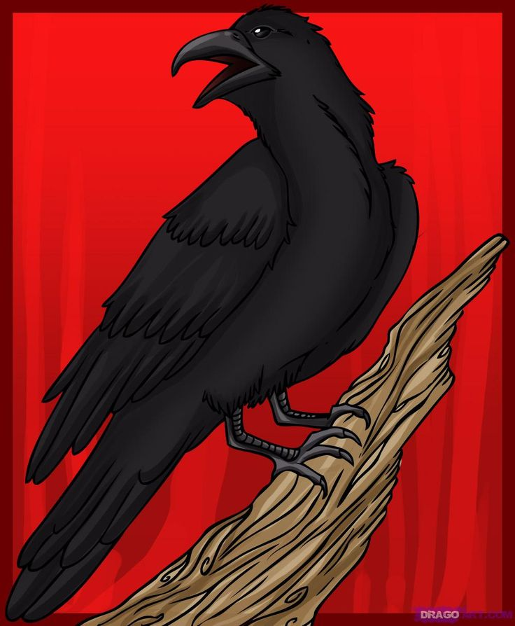 Drawn raven crow beak Drawing Drawing for on How