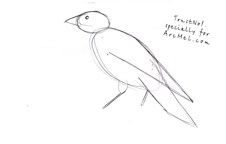 Drawn raven crow beak By draw step ARCMEL a