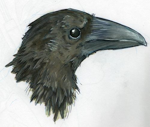 Drawn raven crow beak Jackdaw Raven Ingk: Crow Jackdaw
