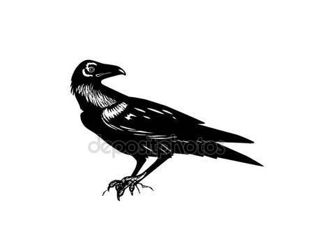 Drawn raven detailed — Raven logo Vector Royalty