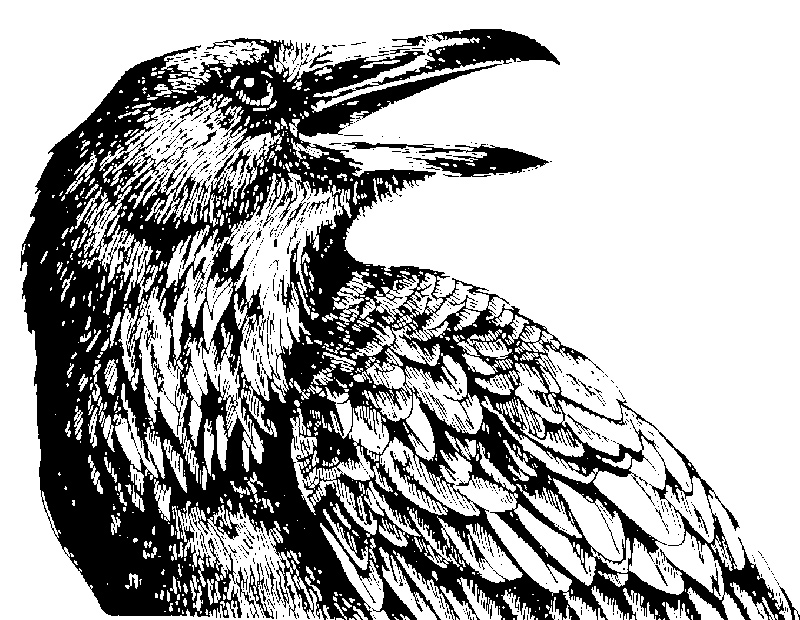 Drawn raven detailed Raven IMAGES PICS Raven; FOR