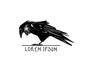 Drawn raven double Drawn Bilder Videos rabe Hand