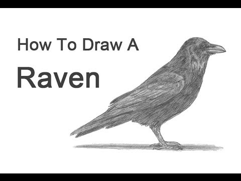 Drawn raven easy  Draw (or Crow) a