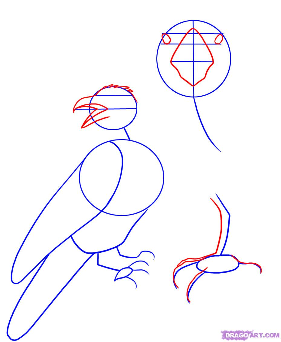 Drawn raven face A raven Step Animals step