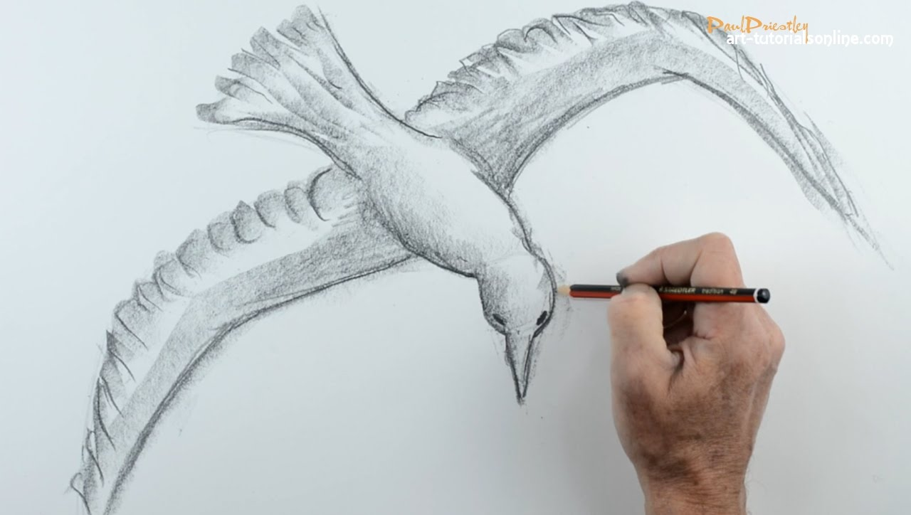 Drawn sparrow flight drawing Flying: How to a