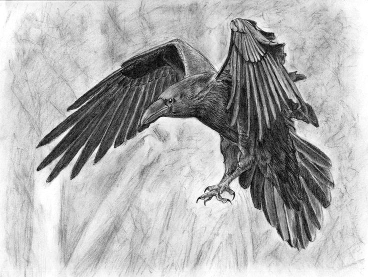 Drawn raven flight drawing Best about 34 Pinterest on