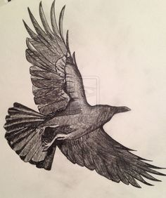 Drawn raven flight drawing Aerial flying Search  Pinterest